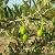 Olivicultura y Almazaras